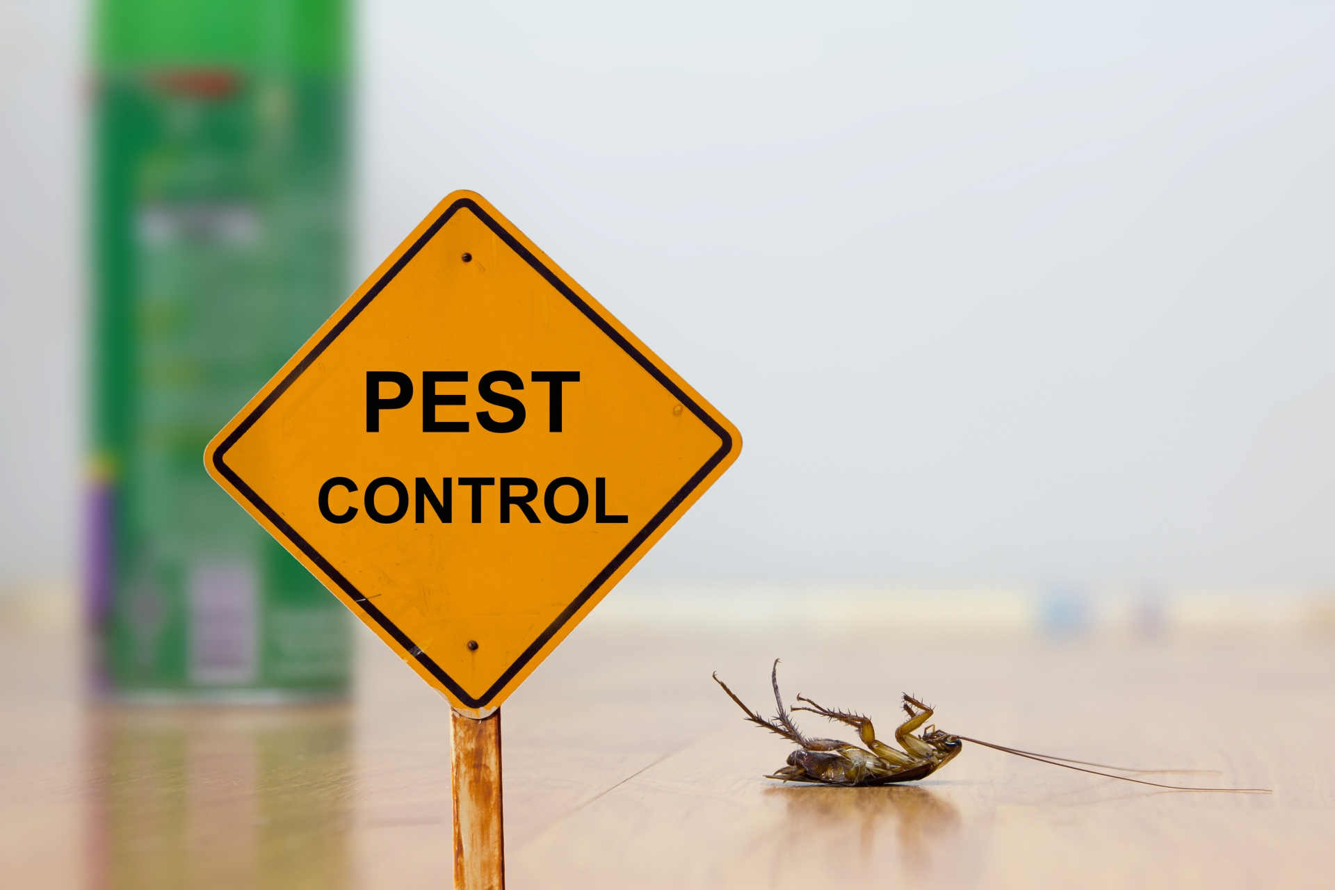 24 Hour Pest Control, Pest Control in Hither Green, SE13. Call Now 020 8166 9746