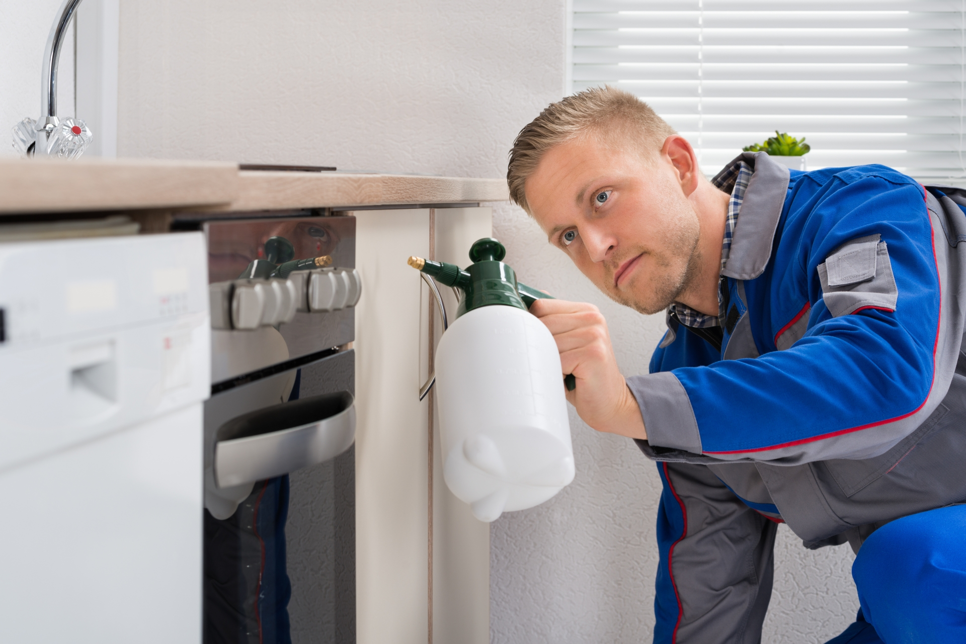 Pest Inspection, Pest Control in Hither Green, SE13. Call Now 020 8166 9746